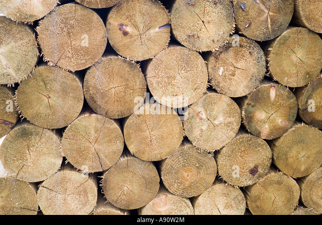 fence posts stock image