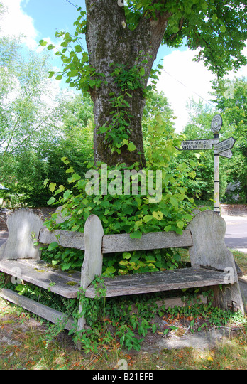 Circular wooden seat around tree  Micheldever  Hampshire  England  United  Kingdom   Stock. Circular Tree Seat Stock Photos   Circular Tree Seat Stock Images
