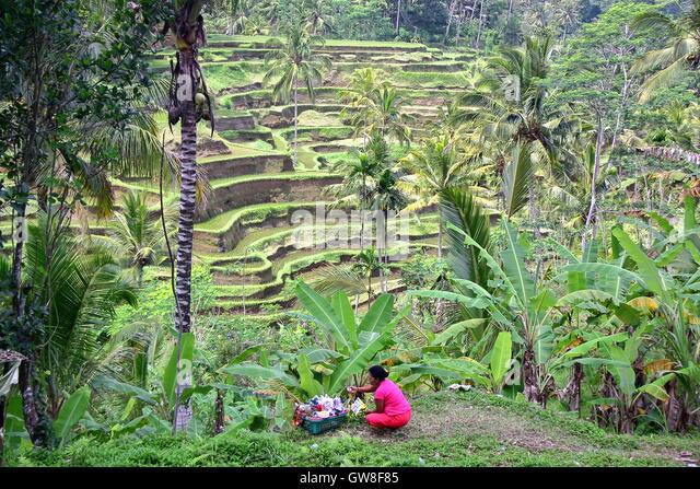 Rice fields ubud stock photos rice fields ubud stock for Terrace ubud bali