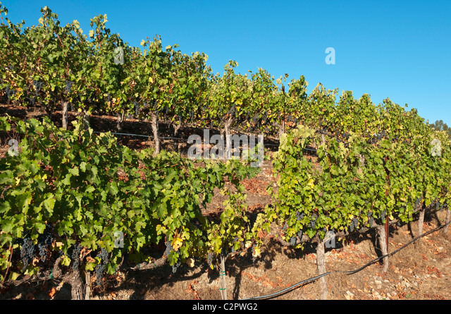 Napa Food Wine Stock Photos Amp Napa Food Wine Stock Images