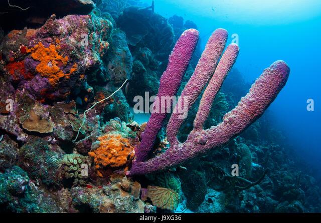 Purple Tube Sponge Diagram Diy Enthusiasts Wiring Diagrams