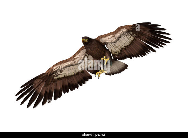 bald eagle render by - photo #19