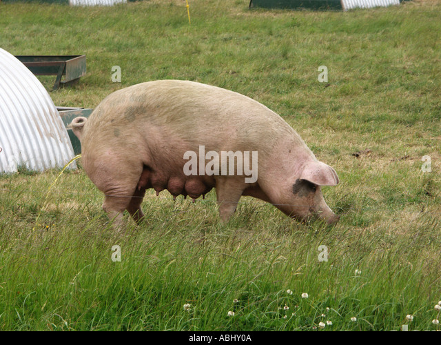 Animal husbandry in the Basque Country
