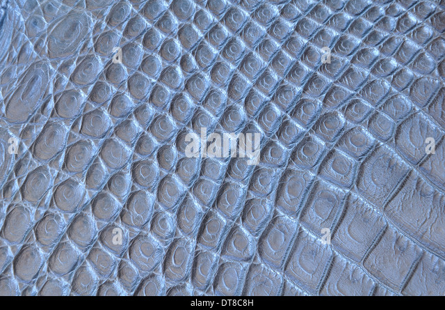 Crocodile Skin Stock Photos Amp Crocodile Skin Stock Images