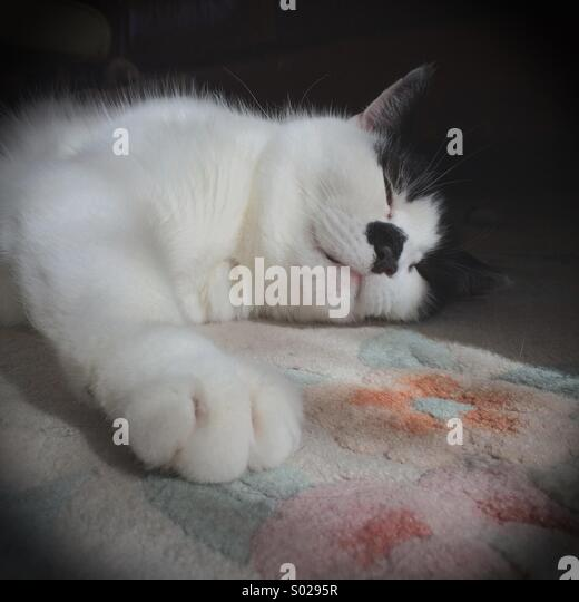 Fluffy white kitten with blue eyes and black patch