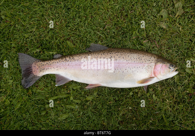trout muslim The trout gallery home exhibitions apps education collections publications about visit  as liberal, as muslim in short, i invite the viewer to resist .