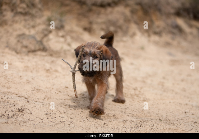 Ainsdale Beach Dogs Allowed