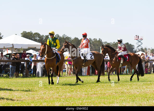 Steeplechase horse stock photos steeplechase horse stock for Steeple chase