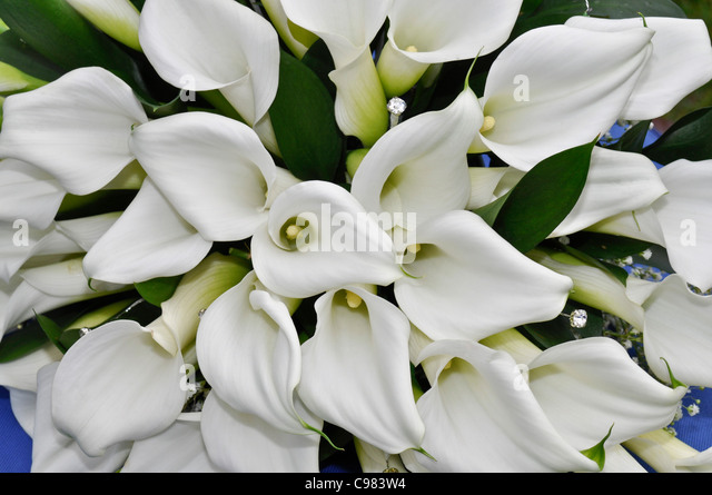 flowers lillies white stock photos  flowers lillies white stock, Beautiful flower