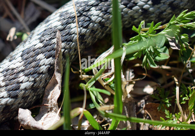 Garden Snake Stock Photos & Garden Snake Stock Images - Alamy