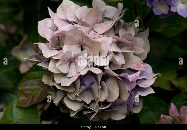 Blossom hindu singles