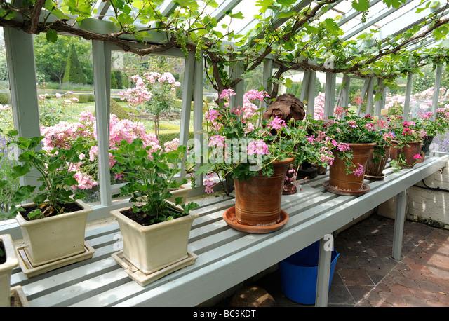 Greenhouse garden stock photos greenhouse garden stock - Grey gardens dive per sempre ...