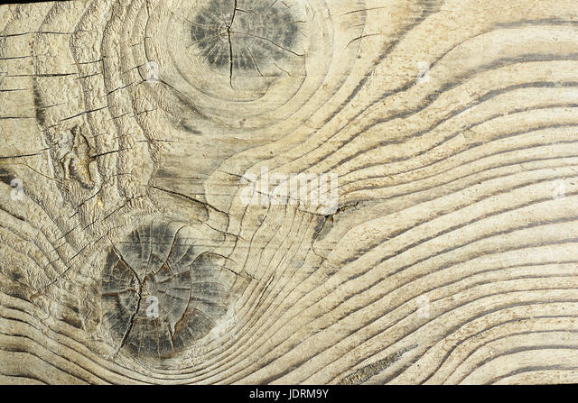 detailed surface of fir plank ( Abies alba ), wooden texture with natural knots - Stock Image