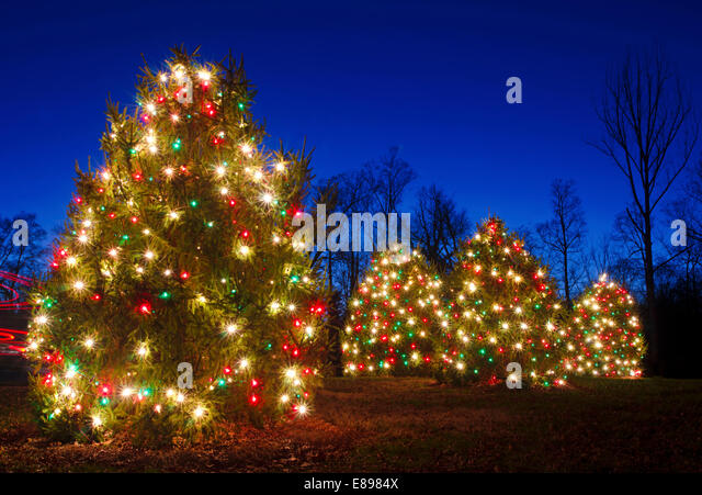 Spruce trees white christmas lights stock photos spruce for Red green christmas tree