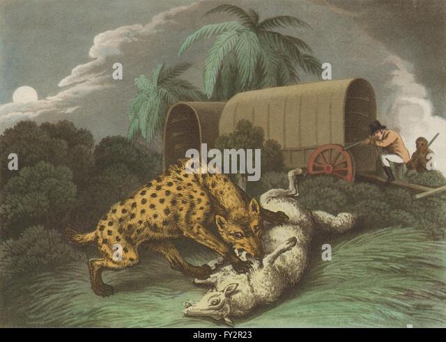 AFRICA: Shooting Hyaena Attacking Sheep. Wagon. Rifles (Edward Orme) , 1814
