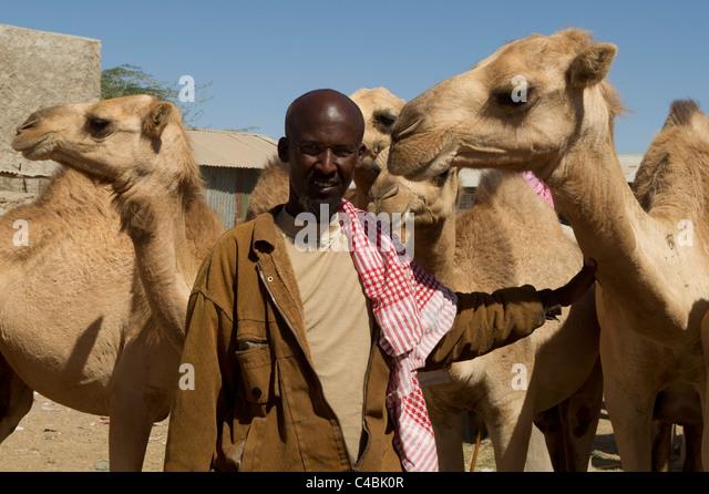 Cute Looking Camels Hargeisa