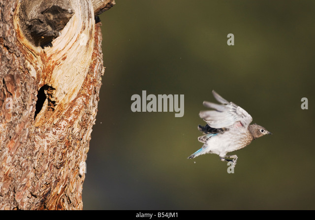 Bird Flying From Nest