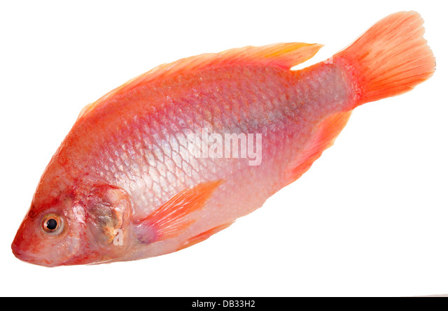 Tilapia stock photos tilapia stock images alamy for What kind of fish is tilapia