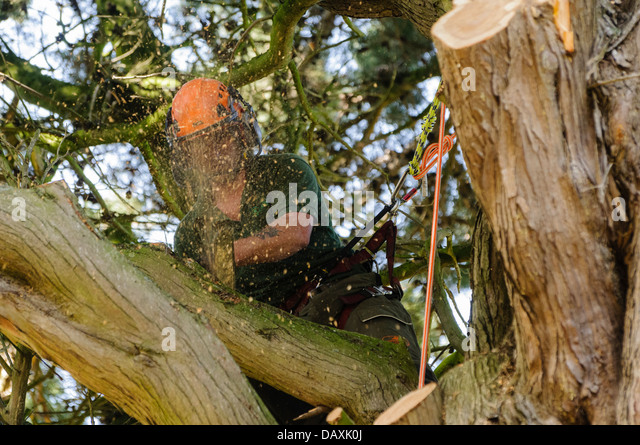 how to cut branches with a chainsaw