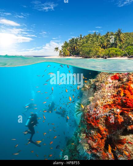Underwater Coral Reef View Horizon Stock Photos & Underwater Coral ...