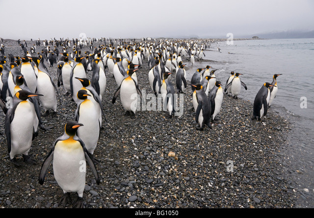 Penguin Group Stock Photos & Penguin Group Stock Images ... Penguin Group