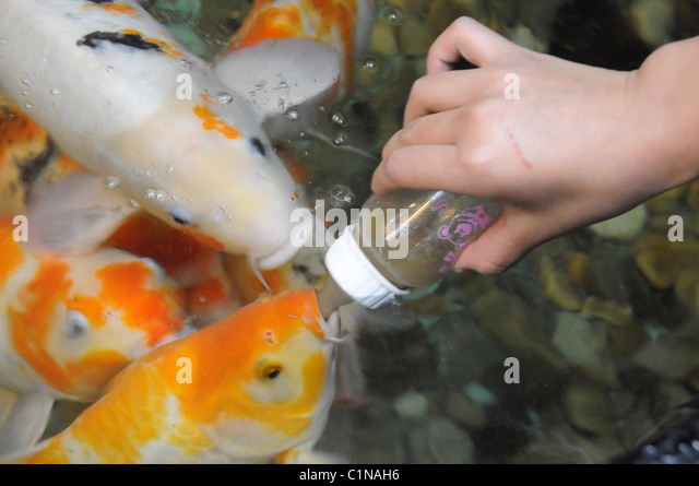Pampered fish in world expensive stock photos pampered for Most expensive fish in the world