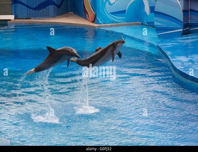 Dolphins in ocean park