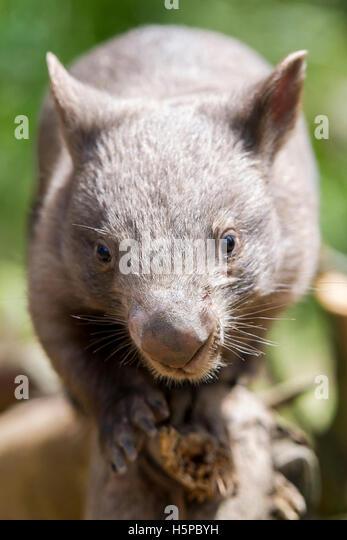 images ballarat wildlife - photo #26