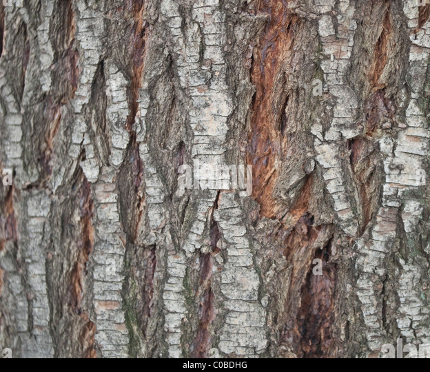 Seamless tree bark wood texture stock photos seamless for Tree trunk uses