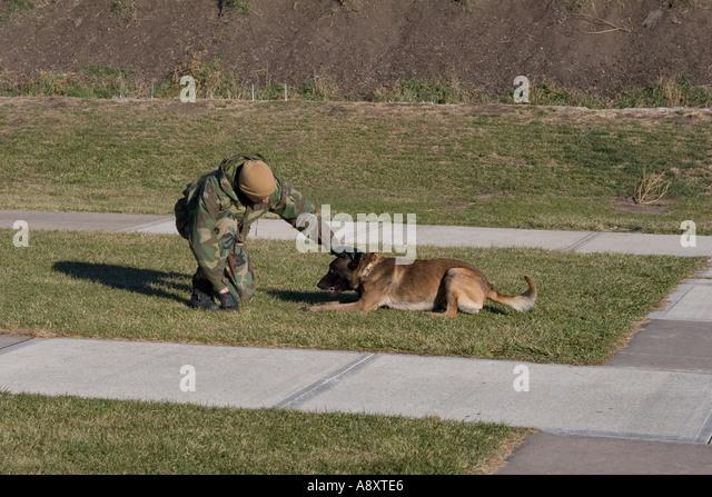 K Dog Training York Nebraska