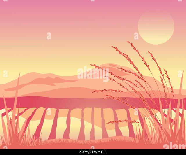 Paddy Field Illustration Stock - 72.9KB