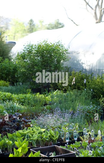 Berkshire Botanical Garden In Stockbridge, Massachusetts Displays Plants  Outside A Greenhouse.   Stock Image