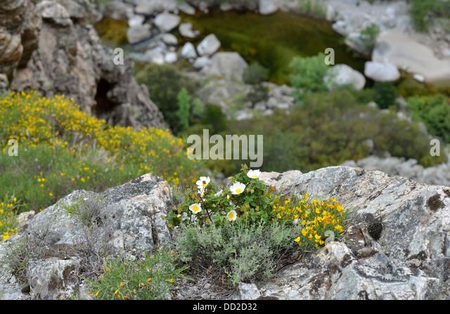 Landscaping Mulch Regina : Mountain landscape along scala di santa regina road niolo valley