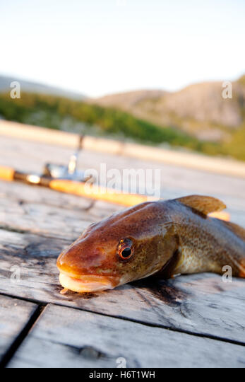 Wood dock texture stock photos wood dock texture stock for Salted cod fish near me