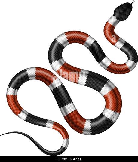 Eastern Milk Snake Stock Photos & Eastern Milk Snake Stock
