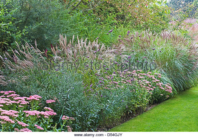 Ornamental grasses border grasses stock photos for Tall grass border