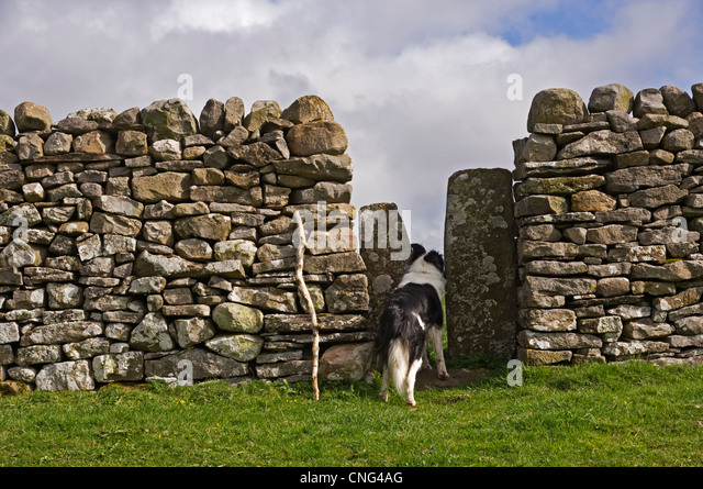 [Image: a-squeeze-stile-in-a-dry-stone-wall-in-t...cng4ag.jpg]
