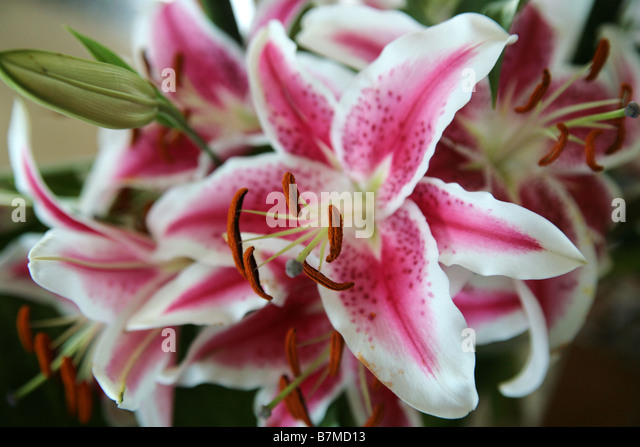 exotic flower arrangement stock photos  exotic flower arrangement, Beautiful flower