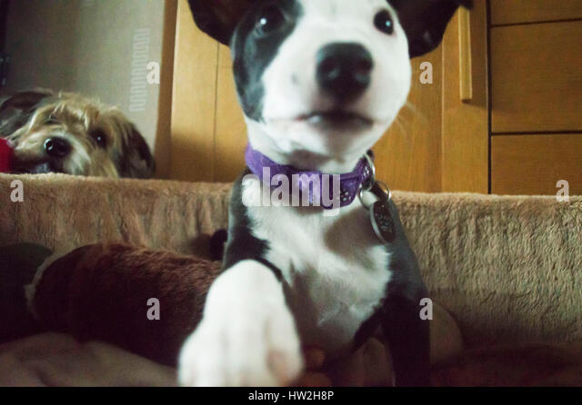 Dog Rescue Centres Banbury