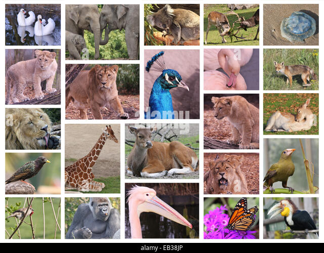 Collage Of Wildlife Pictures