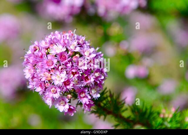lavender colored wildflowers - photo #7