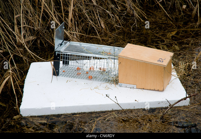 Trapping stock photos trapping stock images alamy - Volle trap ...