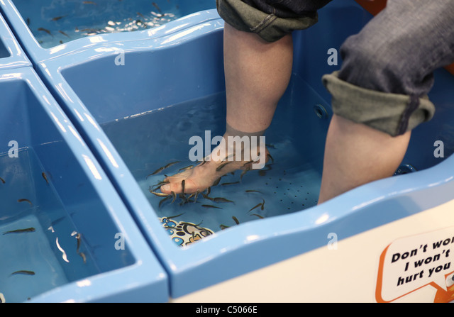 Fish pedicure stock photos fish pedicure stock images for Doctor fish pedicure