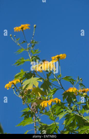sunflower gainesville
