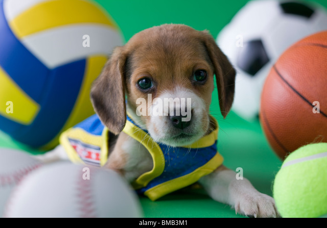Animal Sports Stock Photos & Animal Sports Stock Images ...