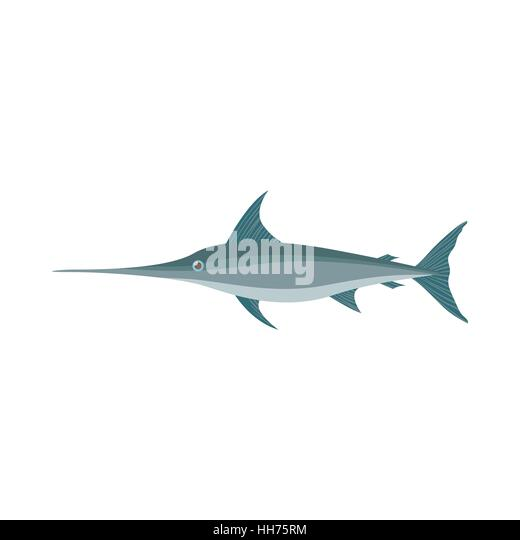 Shark Skeleton Stock Photos & Shark Skeleton Stock Images - Alamy