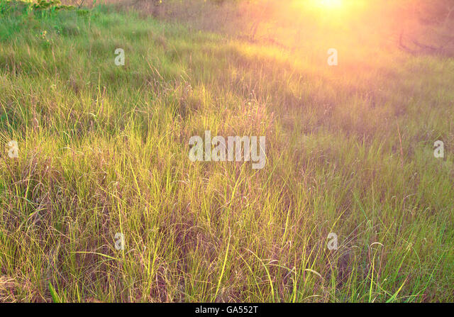 natural wood meadow grass - photo #36