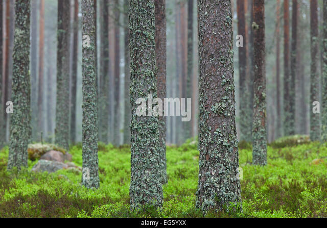 Physodes stock photos physodes stock images alamy for What is a tree trunk covered with 4 letters