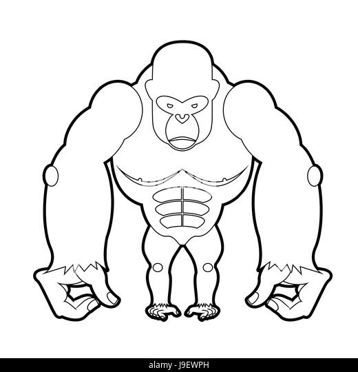 big gorilla coloring book vector illustration of african animal stock image - Silverback Gorilla Coloring Pages