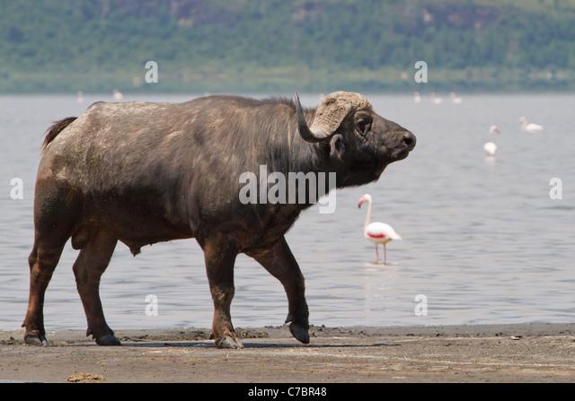 jewish singles in buffalo lake A comprehensive listing of buffalo synagogues, buffalo shuls and buffalojewish temples from mavensearch, the jewish directory.